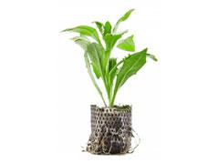 plantpapier